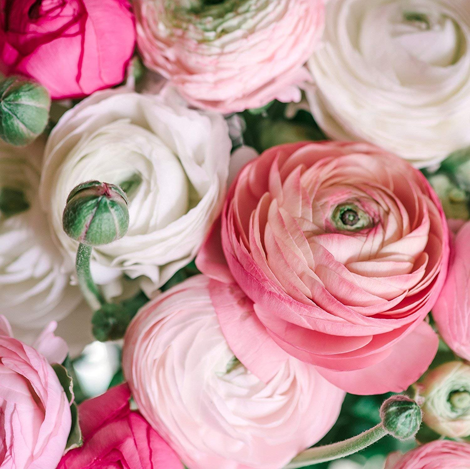 Ranunculus May Newsletter